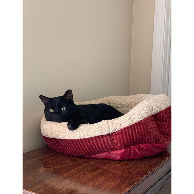 Rascador Jumbo para Gatos