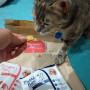 Rascador con Plato y Casa para Gatos