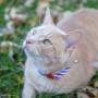 Rascador Marfil para Gatos