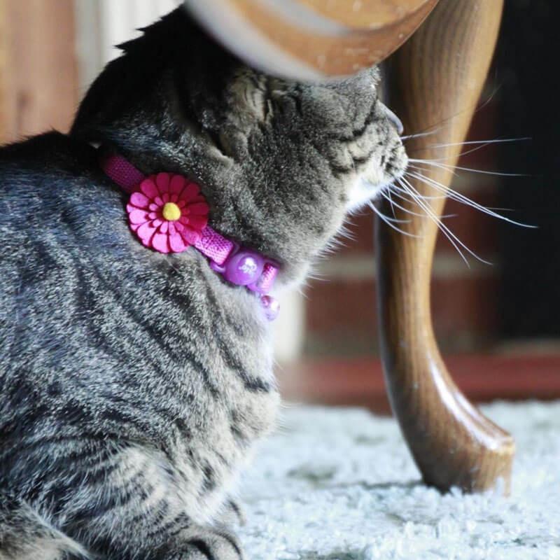 Mini Rascador para Gatos