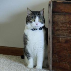 Pawise Puerta Abatible para Gatos