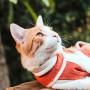 Body de Cobre para Gato y Perro