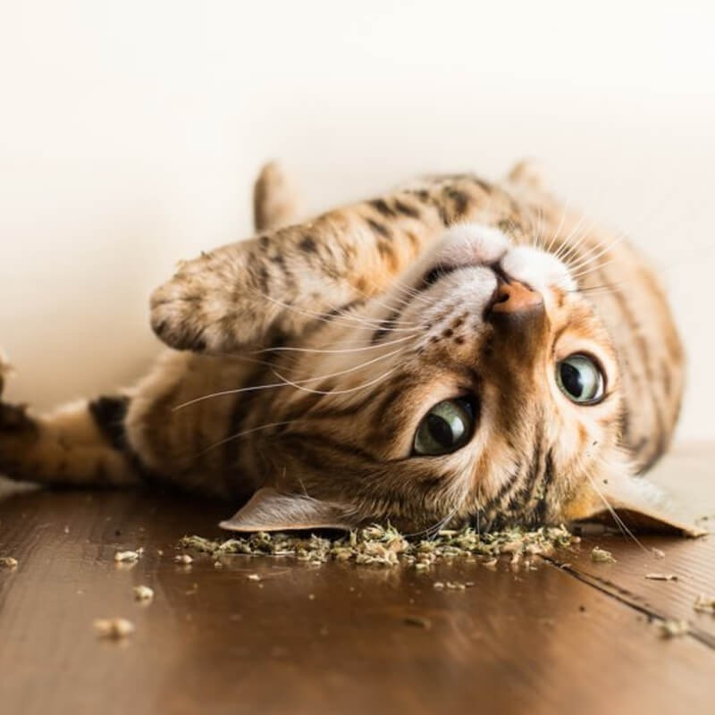 Casita de Madera para Gatos, Varios Colores