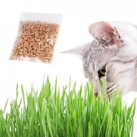 Semillas Pasto de Trigo para Gatos