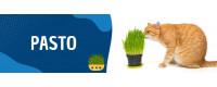 ▷ Pasto para Gatos al Mejor Precio